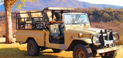safari-382383_640